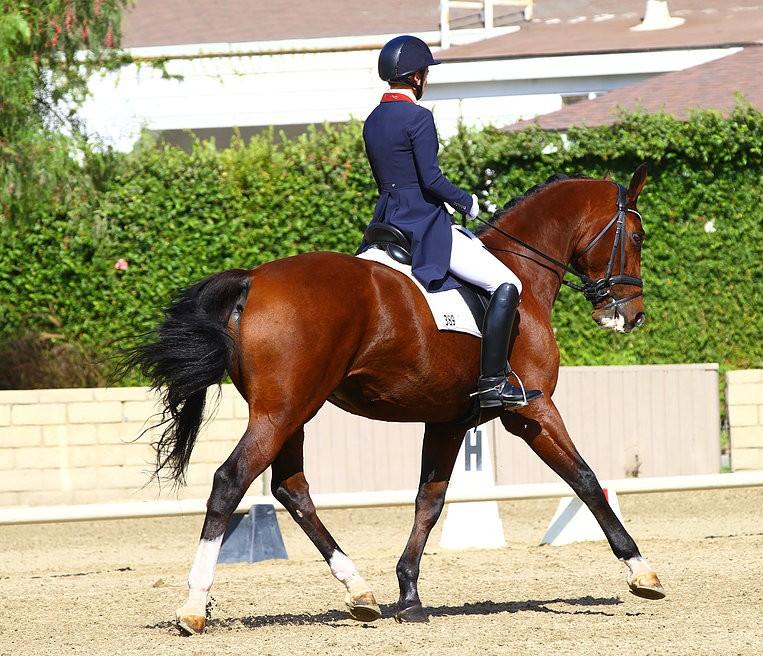 Billings Equestrian