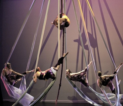 The Circus Project