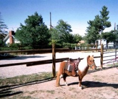 A Worthy Ranch & Stables
